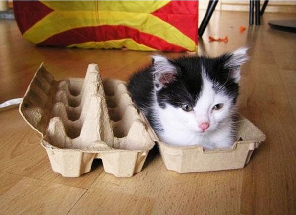 funny-cats-if-it-fits-i-sits-13[1]