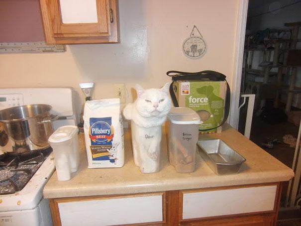 funny-cats-if-it-fits-i-sits-16[1]
