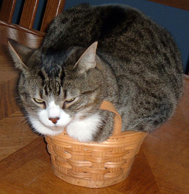 funny-cats-if-it-fits-i-sits-18[1]
