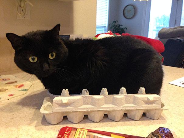 funny-cats-if-it-fits-i-sits-2[1]