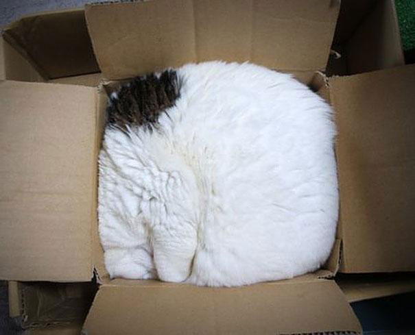 funny-cats-if-it-fits-i-sits-6[1]
