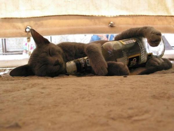Drunk-cat[1]
