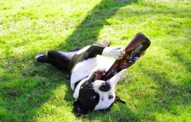 Drunk-dog-in-park[1]