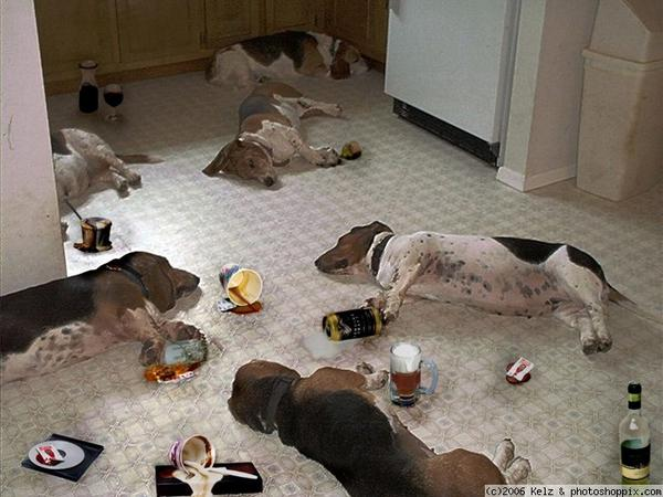 Most-Funny-Drunk-Animals-12[1]