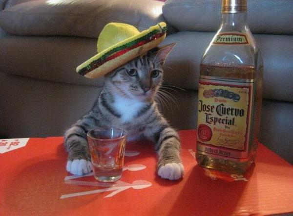 drunk-cat-funny-drinking[1]